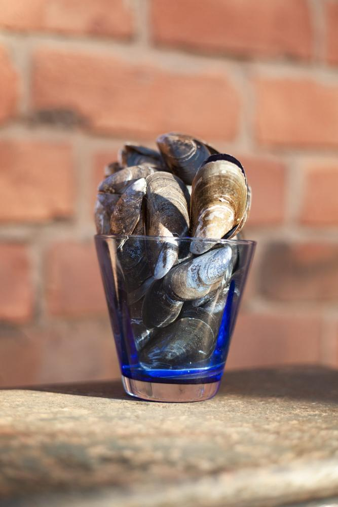 Glass of mussels on a wall with brick background
